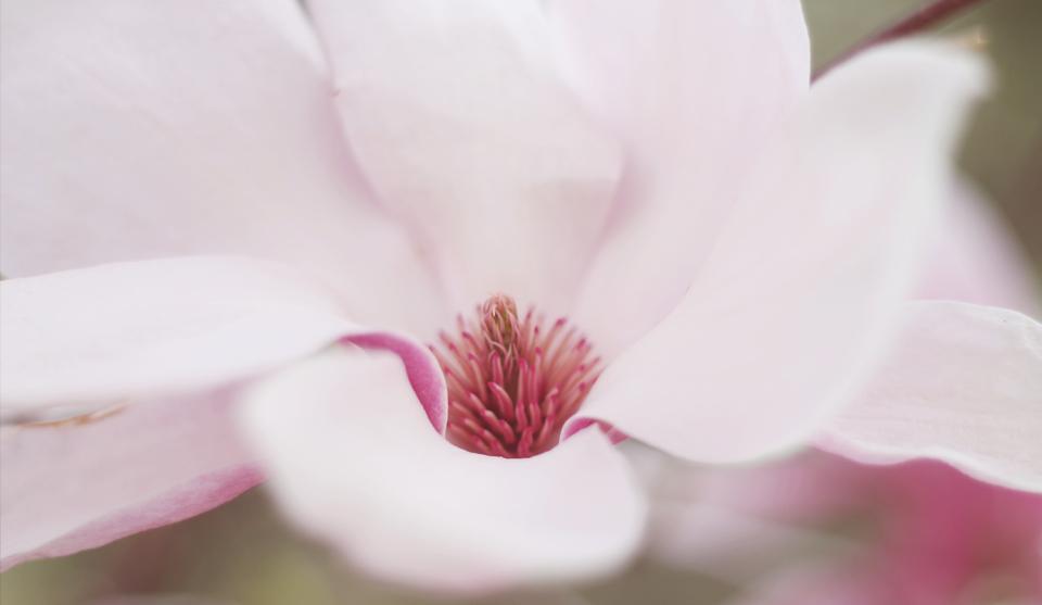 Licht roze bloem bij Afrodite
